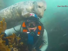 British diver makes friends with playful seals