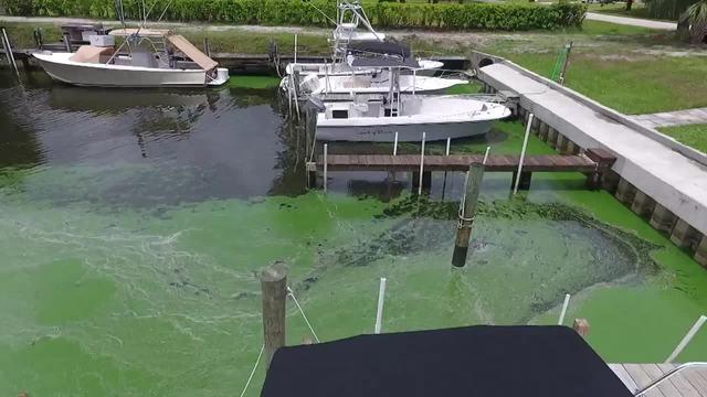 Protecting Paradise- A yearlong look at South Florida environmental issues