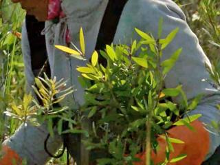 Fight against invasive ferns in wildlife refuge