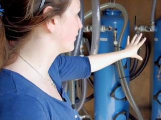 Wellington company hopes to solve algae issue