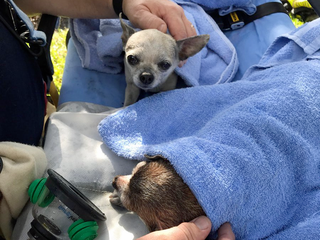 Person, pets rescued in Martin County house fire